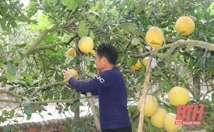 Thanh Hoá: Xã Bắc Lương phát triển cây ăn quả