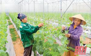 Thanh Hoá: Hiệu quả các chính sách hỗ trợ phát triển nông nghiệp