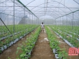 Thanh Hoá: Xã Kiên Thọ phát triển nông nghiệp công nghệ cao