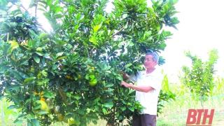 Thanh Hoá: Huyện Ngọc Lặc xây dựng, phát triển các mô hình kinh tế hiệu quả