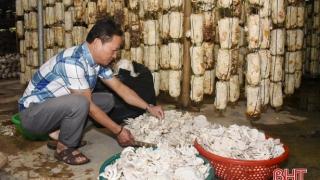 Hà Tĩnh: Kinh tế tập thể ở Lộc Hà mỗi năm doanh thu gần 350 tỷ đồng
