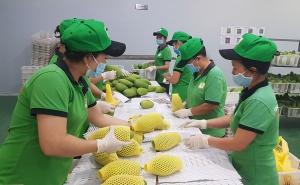 An Giang: Nhiều doanh nghiệp liên kết tiêu thụ cây ăn trái