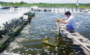 TP. Hồ Chí Minh: Phát huy vai trò của hợp tác xã kiểu mới