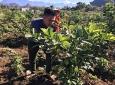 Lai Châu: Đẩy mạnh phát triển kinh tế tập thể, hợp tác xã