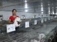 Hà Nội: Phát triển hợp tác xã nông nghiệp gắn với sản xuất theo chuỗi giá trị