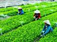 Liên minh HTX Việt Nam tham gia ban Chỉ đạo tổng kết 20 năm đổi mới, phát triển kinh tế tập thể