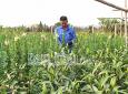 Nam Định: Khuyến khích nông dân sản xuất an toàn để phát triển bền vững