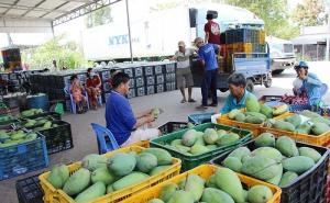 An Giang: Để liên kết sản xuất, tiêu thụ trái cây hiệu quả