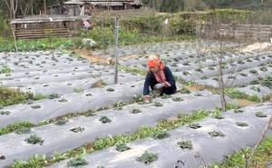 Hà Giang: Hồ Thầu tập trung chuyển đổi cơ cấu cây trồng, vật nuôi