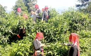 Hà Giang: Thúc đẩy hoạt động sở hữu trí tuệ sản phẩm đặc sản địa phương