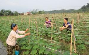 Hà Giang: Hợp tác xã Nông dược Việt Nhật AMH cùng nông dân khởi nghiệp