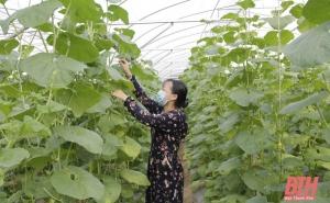 Thanh Hoá: Phát triển kinh tế tập thể năng động, hiệu quả