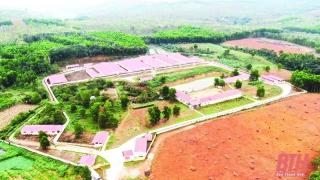 Phát triển chăn nuôi theo hướng bền vững: Cơ chế, chính sách khuyến khích - động lực để phát triển chăn nuôi