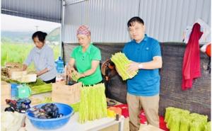 Yên Bái: Hợp tác xã nông nghiệp Vũ Thịnh - làm giàu từ trồng Măng tây