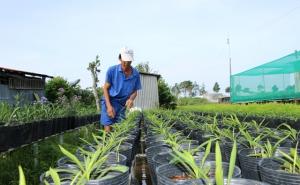 Tập trung phát triển kinh tế tập thể theo hướng bền vững