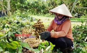 Bình Phước: Tiêu thụ trái cây cần giải pháp bền vững