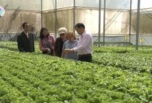 HTX Sunfood Đà Lạt: Mô hình sản xuất liên kết theo chuỗi giá trị hiệu quả cao