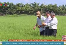 Gia Lai: Chủ động sx lúa giống cho thương hiệu gạo Phú Thiện - HTX nông nghiệp Chư A Thái