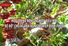 Hợp tác xã nông nghiệp kiểu mới Bệ đỡ cho ngành nông nghiệp Bình Phước