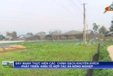 Cao Bằng: Hợp tác xã nông nghiệp phát huy sản phẩm thế mạnh của địa phương