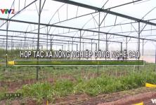HTX đầu tư Nông trại xanh và Phát triển bò Ba Vì - HTX nông nghiệp công nghệ cao