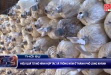 Hiệu quả từ mô hình Hợp tác xã trồng nấm ở thành phố Long Khánh