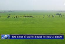 Kiên Giang: Nông dân Hòn Đất ứng dụng khoa học công nghệ vào sản xuất