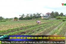 Hải Phòng: HTX kiểu mới nỗ lực tham gia vào chuỗi liên kết tiêu thụ sản phẩm 10:151 view