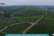 Mô hình sản xuất chuỗi gắn với giá trị  sản xuất nông sản tỉnh Sơn La
