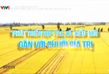 Con đường nông sản: Phát triển hợp tác xã kiểu mới gắn với chuỗi giá trị
