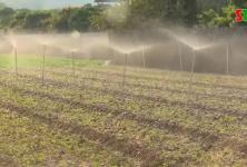 Sơn La: Toàn tỉnh có 560 hợp tác xã hoạt động lĩnh vực nông, lâm, thủy sản