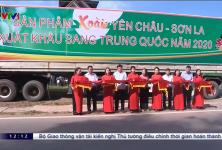 Lễ xuất khẩu lô xoài Sơn La đầu tiên