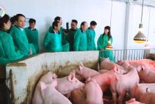 Lễ khánh thành Dự án chăn nuôi lợn thương phẩm tại Lạng Sơn