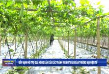 Đẩy mạnh hỗ trợ đưa nông sản của các thành viên HTX lên sàn TMĐT