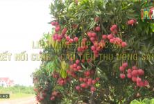 Liên minh HTX kết nối cung cầu tiêu thụ nông sản