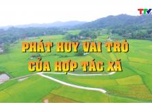 Tuyên Quang: PHÁT HUY VAI TRÒ CỦA HỢP TÁC XÃ