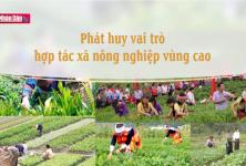 Phát huy vai trò hợp tác xã nông nghiệp vùng cao