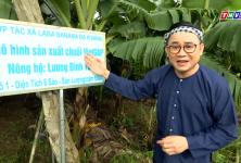 Vĩnh Long: Nông Dân xin chào! - Giám đốc Hợp tác xã Laba banana Đạ K'Nàng