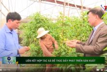 TH Thái Nguyên: Liên kết Hợp tác xã để cùng nhau phát triển sản xuất