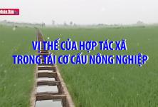 Vị thế của hợp tác xã trong tái cơ cấu nông nghiệp