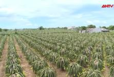 Xóa rào cản để nông dân chủ động đưa nông sản online
