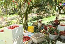 Chuyện hôm nay: Bài toán nguồn vốn cho hợp tác xã nông nghiệp