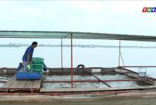 Vĩnh Long: Chọn 5 HTX nông nghiệp điển hình về sản xuất ATTP để nhân rộng