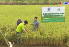 Trà Vinh: Hợp tác xã nông nghiệp Long Hiệp huyện Trà Cú
