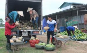 Mô hình liên kết sản xuất và tiêu thụ nông sản