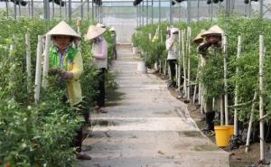 Đẩy tăng trưởng tín dụng từ nông nghiệp, nông thôn