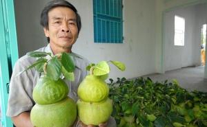 Những nông dân vàng miền Tây: Chuyện về