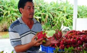 Kiếm tiền tỷ nhờ trồng thanh long ở U Minh Hạ