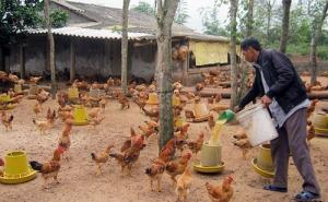 Mô hình HTX Nam Hồng Quảng (Quảng Bình) giúp người dân xóa đói giảm nghèo