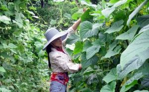 Huyện Lệ Thủy (Quảng Bình): Triển khai chuyển đổi HTX theo Luật HTX năm 2012